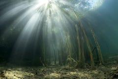 与芦苇香蒲的水下的风景 图库摄影