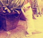 与芦荟维拉的猫叫声 库存图片