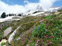 在瑞尼尔山的高山风景 免版税库存照片
