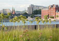 与花、河和大厦的市中心 免版税图库摄影