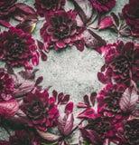 与花、瓣和叶子的黑暗的紫色花卉框架在灰色背景,顶视图 免版税库存照片