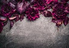 与花、瓣和叶子的黑暗的紫色花卉边界在灰色背景,顶视图 免版税图库摄影
