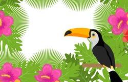 与花、toucan的植物和的鸟的热带框架 您的设计的夏天花卉模板 异乎寻常的背景 向量 免版税图库摄影