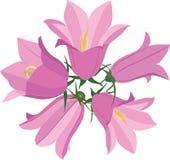 与花会开蓝色钟形花的草的花束 图库摄影