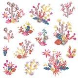 与花例证的彩色塑泥多汁植物 花束和arr 向量例证
