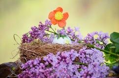 与花卉生长的复活节彩蛋从它 库存图片