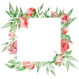 与花卡片模板的浪漫框架 与绿色的水彩牡丹在白色背景离开 象查找的画笔活性炭被画的现有量例证以图例解释者做柔和的淡色彩对传统 免版税图库摄影
