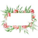 与花卡片模板的浪漫框架 与绿色的水彩牡丹在白色背景离开 象查找的画笔活性炭被画的现有量例证以图例解释者做柔和的淡色彩对传统 免版税库存图片