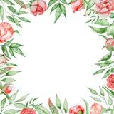与花卡片模板的浪漫框架 与绿色的水彩牡丹在白色背景离开 象查找的画笔活性炭被画的现有量例证以图例解释者做柔和的淡色彩对传统 免版税库存照片