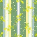 与花含羞草的无缝的垂直的样式 图库摄影