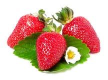 与花和叶子的三个草莓在白色背景 免版税图库摄影