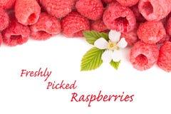 与花和叶子的新近地被采摘的莓 免版税库存图片