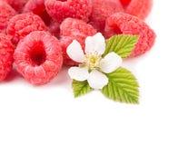与花和叶子的新鲜的莓 免版税库存图片