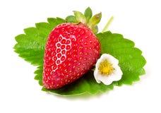 与花和叶子的草莓在白色背景 免版税图库摄影