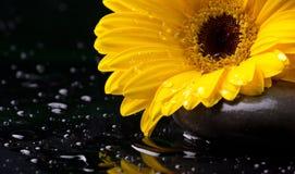 与花和小卵石的Thalassotherapy 库存照片