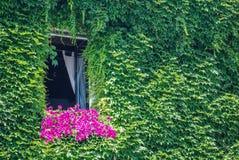 与花和常春藤的窗口 免版税库存图片