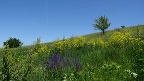 与花和树的小山 库存图片