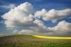 与花和油菜籽的绿色领域在蓝色多云天空下 免版税库存图片