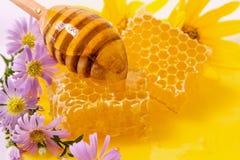与花和浸染工静物画的美丽的蜂窝, 库存图片