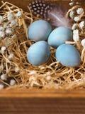 与花和鸟羽毛的自创五颜六色的复活节装饰鹌鹑蛋 库存图片