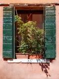 与花和绿色快门的窗口在老桃红色石墙背景中在一个晴天 免版税库存照片