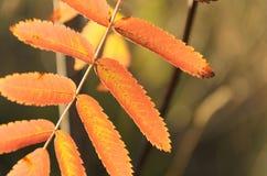 与花揪叶子的抽象秋季背景 免版税图库摄影