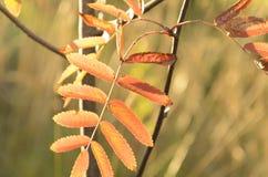 与花揪叶子的抽象秋季背景 库存图片