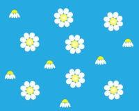 与花春黄菊的蓝色背景 免版税库存照片