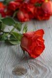 与花束的一朵新鲜的红色玫瑰作为背景 免版税库存照片
