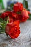 与花束的一朵红色玫瑰 免版税库存照片
