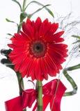 与花束的红色大丁草花 免版税库存照片