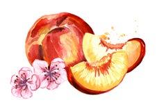 与花构成的Rripe桃子 水彩手拉的例证,隔绝在白色背景 图库摄影