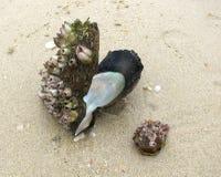 与花梢分枝的贝壳在安达曼的含沙岸 免版税库存照片