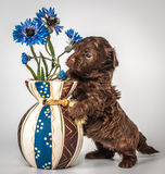 与花瓶的小狗 库存图片
