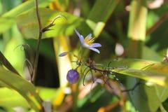 与花的一个微小的莓果 免版税库存图片