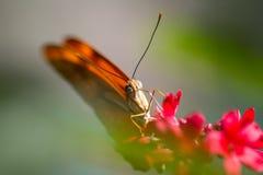 与花的一只美丽的蝴蝶本质上 免版税库存图片