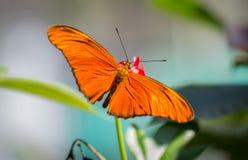与花的一只美丽的蝴蝶本质上 免版税库存照片