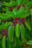 与花的一棵庭院树 免版税库存图片