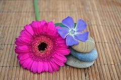 与花的三zenstones在竹芦苇背景 库存照片