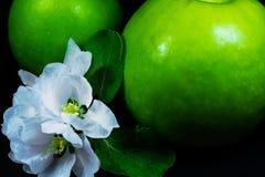 与花的两个新鲜的成熟绿色苹果在黑反射性背景关闭  免版税图库摄影