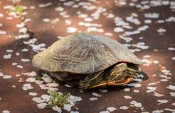 与花的乌龟 库存照片