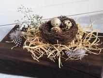 与花的五颜六色的复活节装饰鹌鹑蛋和在巢的鸟羽毛 库存照片