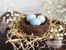 与花的五颜六色的复活节装饰鹌鹑蛋和在巢的鸟羽毛 免版税库存图片
