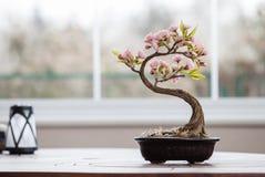 与花的人为盆景树 免版税图库摄影