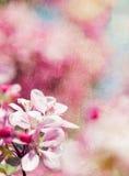 与花的减速火箭的春天背景 免版税库存图片