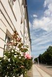 与花的历史门面 免版税库存照片