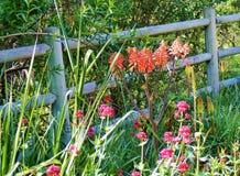 与花的国家场面在木篱芭旁边 库存图片