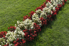 与花的奥地利旗子 库存照片