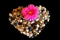与花的小卵石心脏在后面背景 免版税库存图片