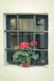 与花的小窗口 库存图片
